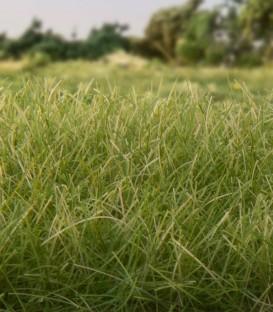 4 mm Static Grass Medium Green FS618 Woodland Scenics.