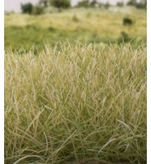static grass by woodland scenics